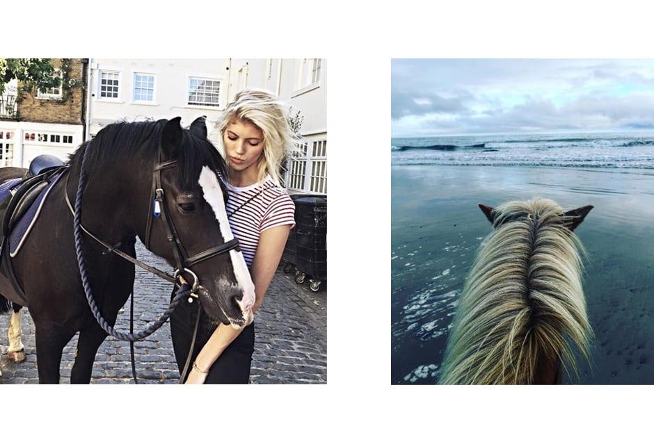 HORSES_devwindsor_constancejablonski