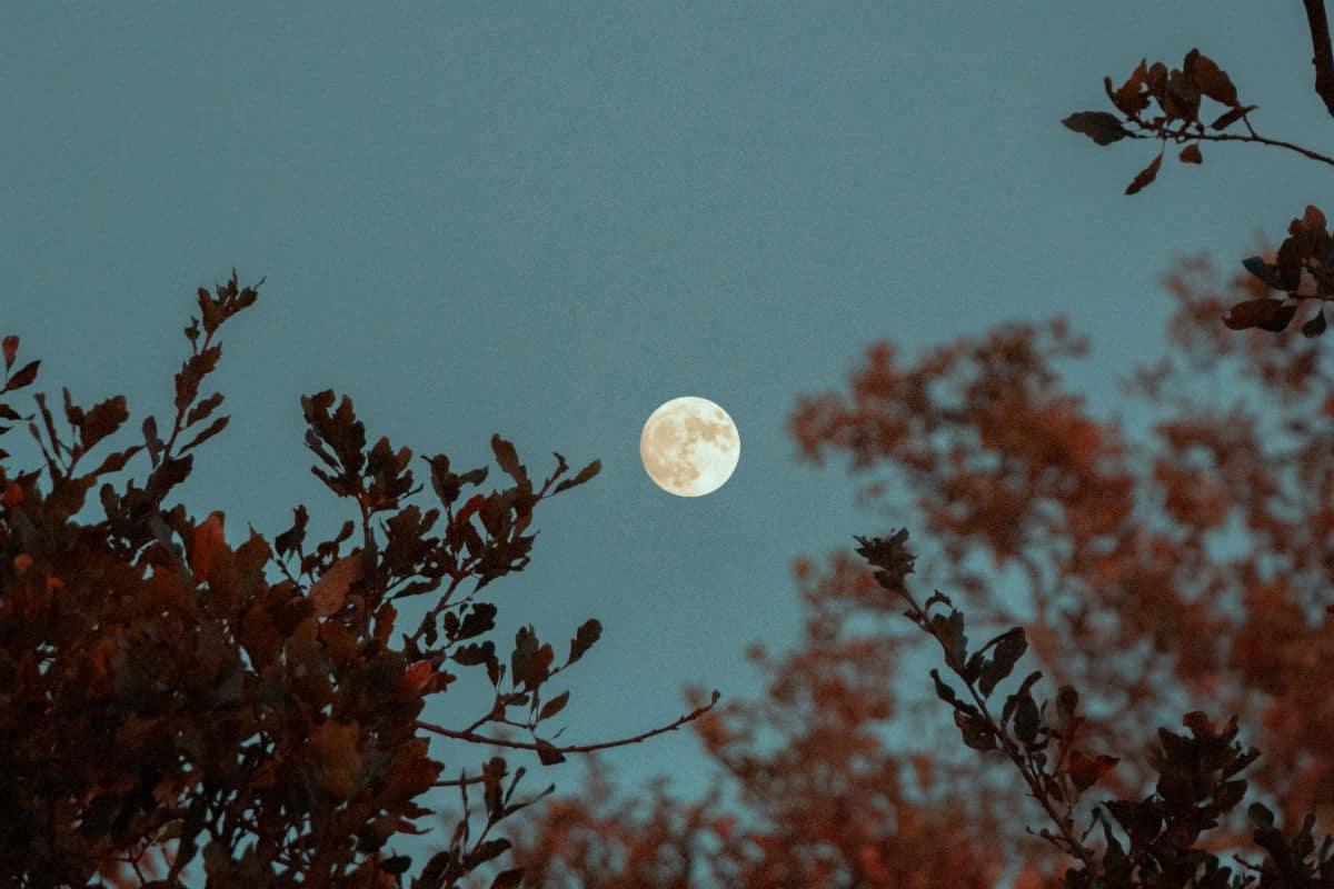 Strawberry full moon june