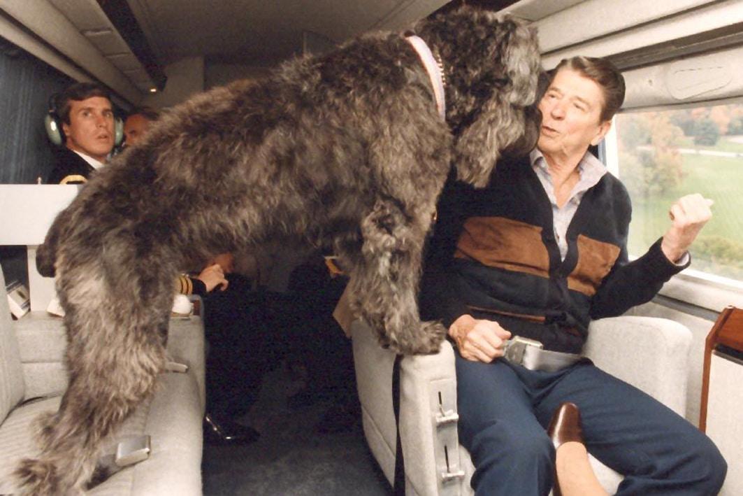 ronald reagan dog